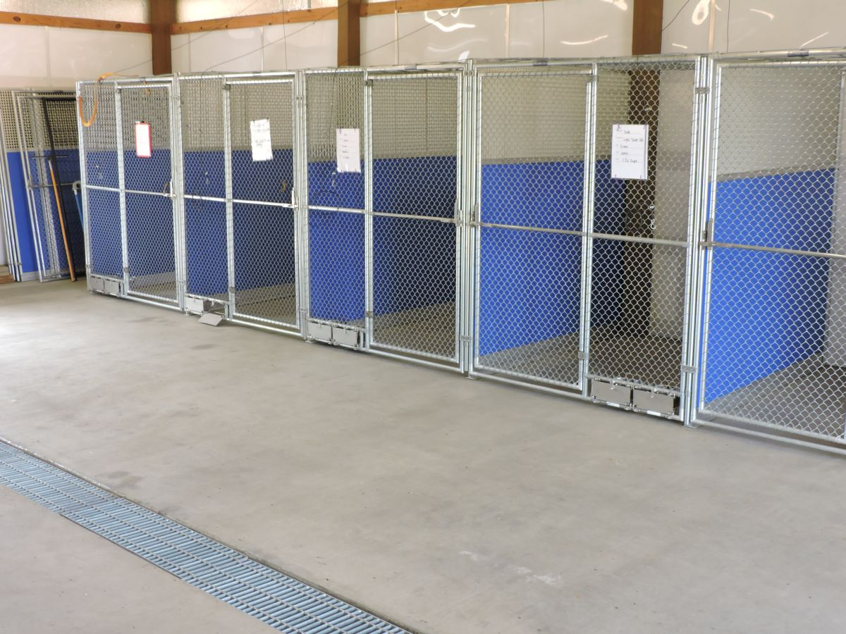 Dog-Training-and-Boarding-003