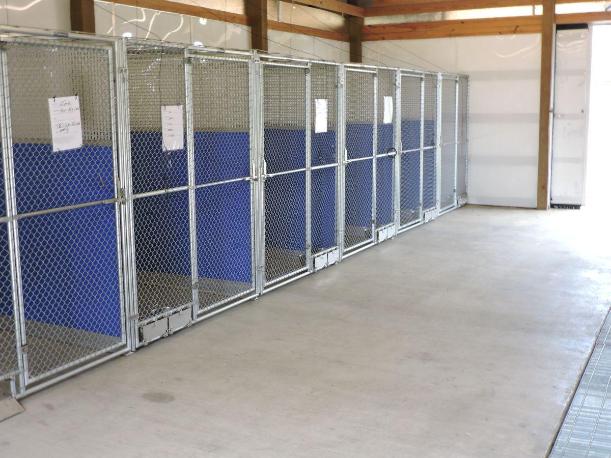 Dog-Training-and-Boarding-005